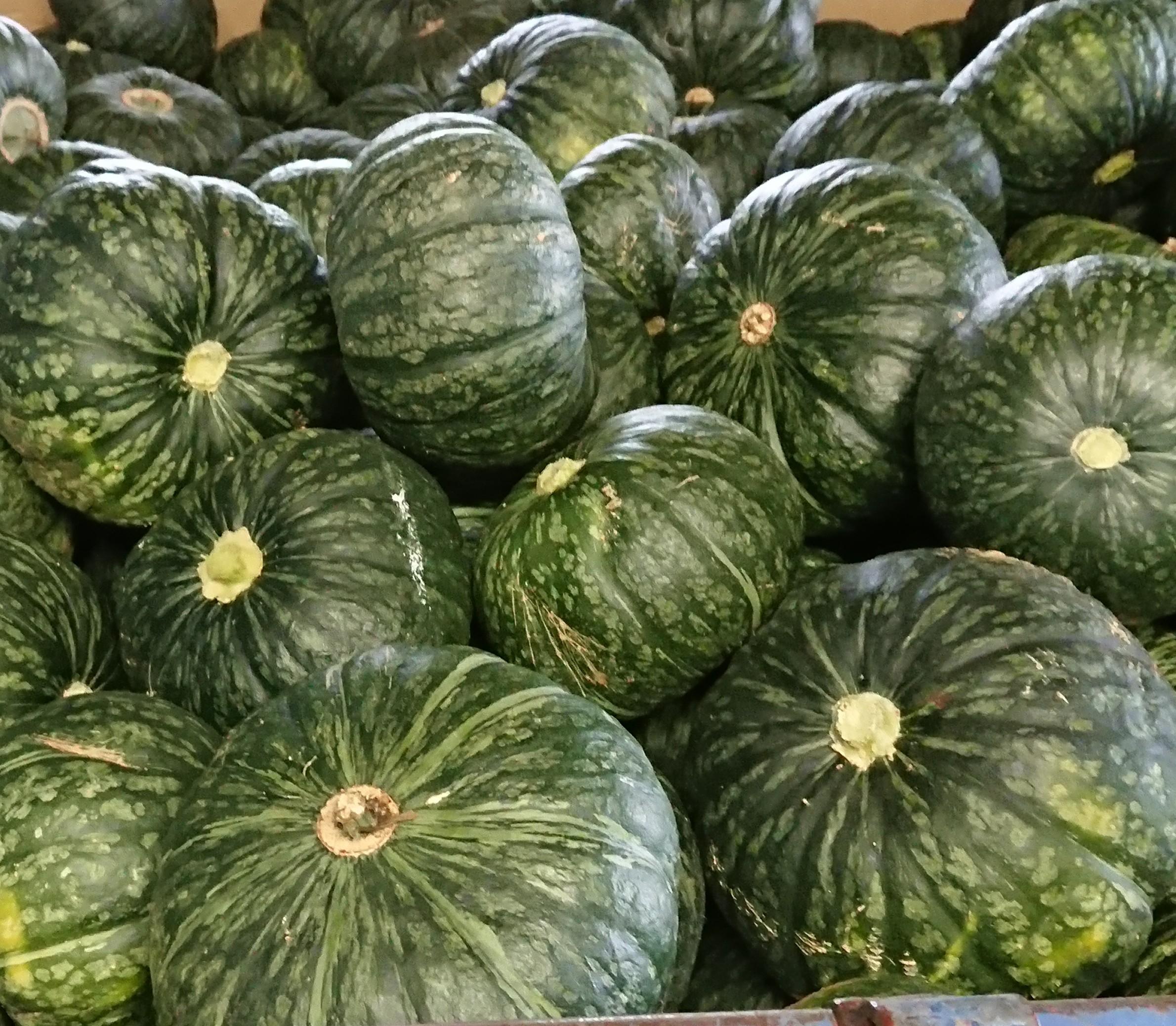 野菜の収穫時期